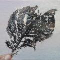 「落ち葉/fallen leaf」(ご売約済み)