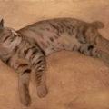 「ネコ!CAT」