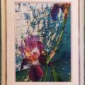 皐月晴れの菖蒲(Iris in the Early Summer)/齋藤雅史