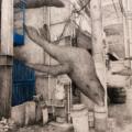 HAZAMA-32 California sea lion/黒木リン