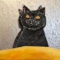 「黒猫の日」/aomana